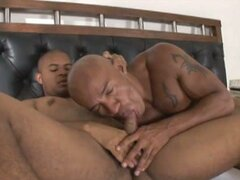 A couple of gay hunks suck cock and do hardcore anal