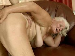 Judi gets banged by a young and horny stallion