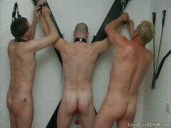 Gay bdsm party with cock and balls torture